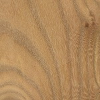 DZD-Hardwood: red elm